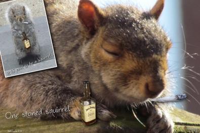 2012 0405 Squirrel C