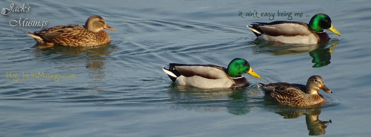 2016-1130-ducks-cover-pagelr