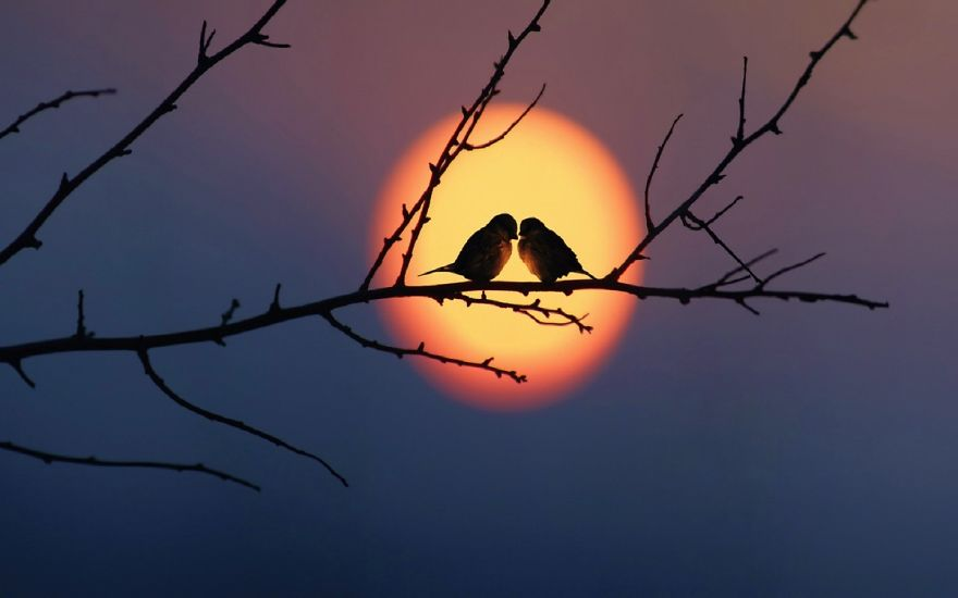 love-birds-sky-sunset.jpg