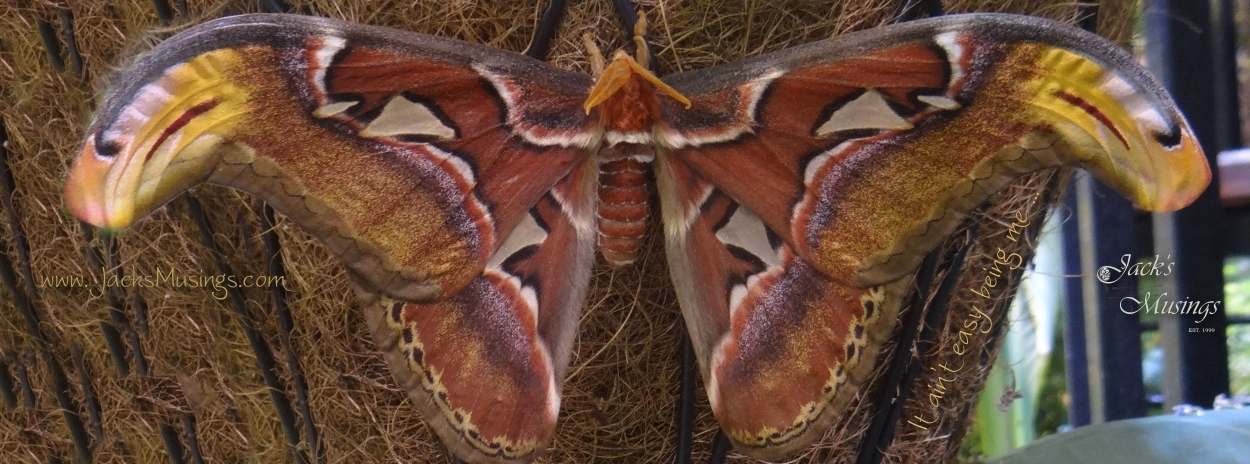 2013 0316 Butterfly2 Cover Pagelr.jpg