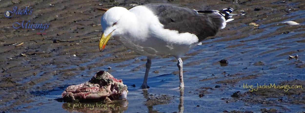 2018 0311 Seagull Cranium Cover Pagelr
