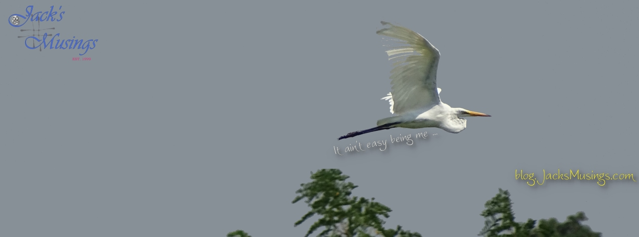 2018 0808 Great Egret Cover Pagelr