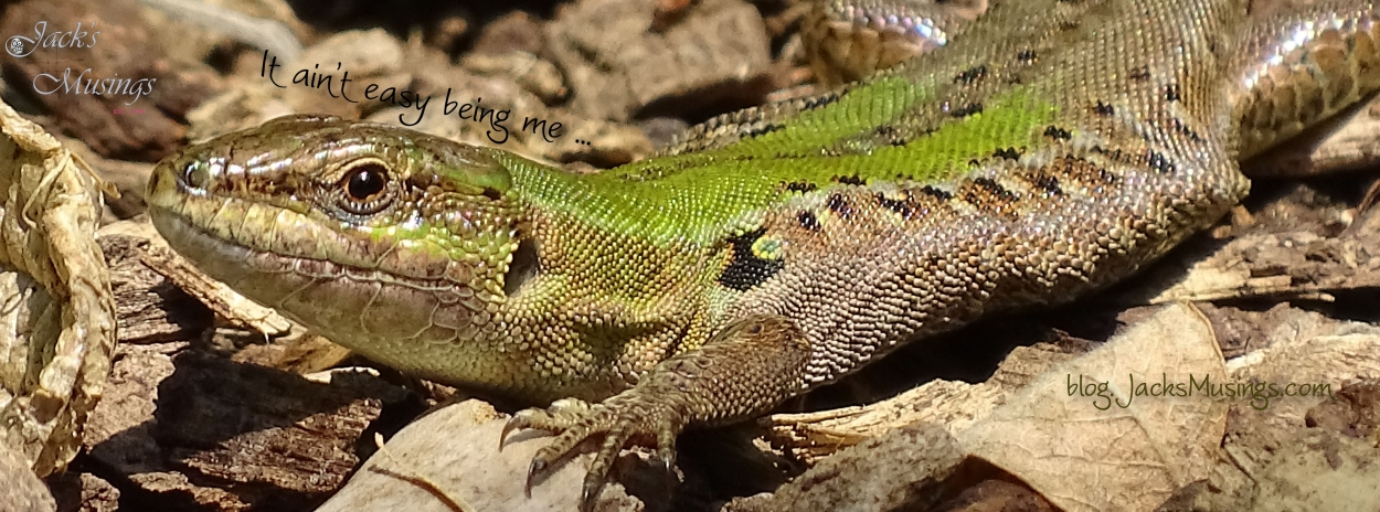 2018 0824 Tree Lizard Cover Pagelr