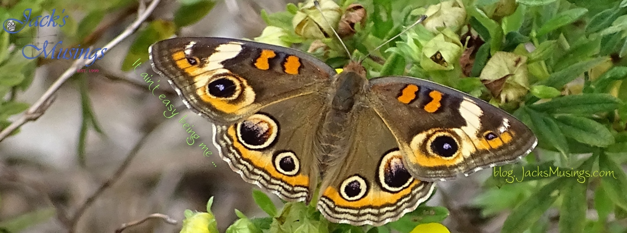 2018 0727 Common Buckeye Cover Pagelr